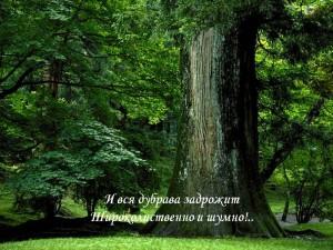 tutchev15